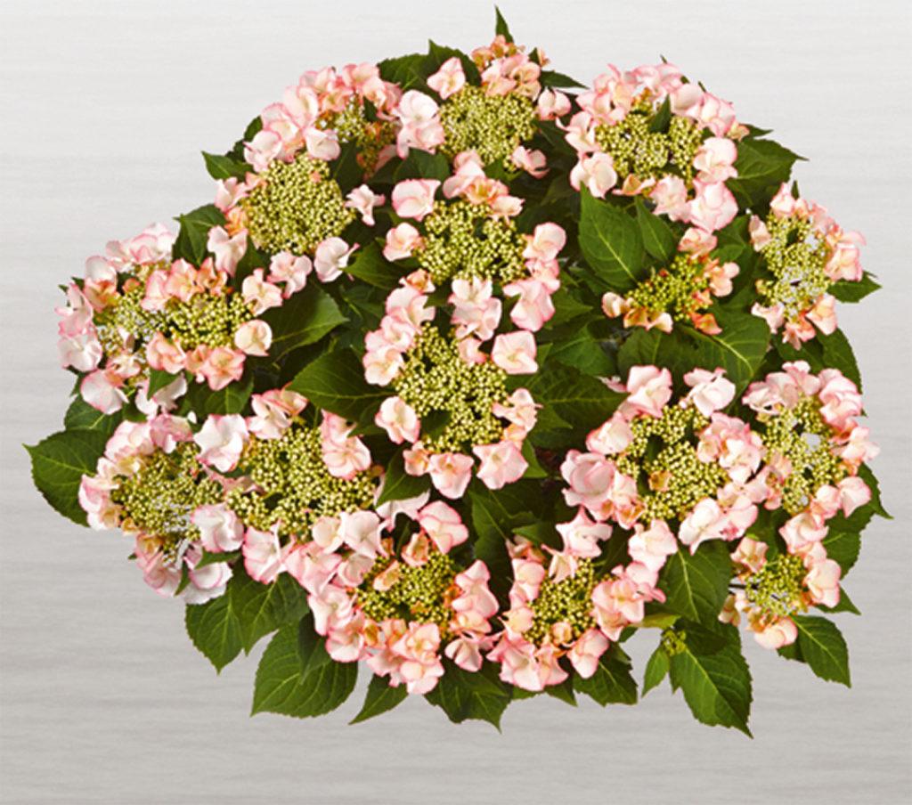 Hortensia Frisbee® Petticoat